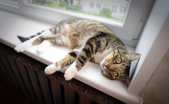 В Латвии открыли первый в мире бэби-бокс для котят