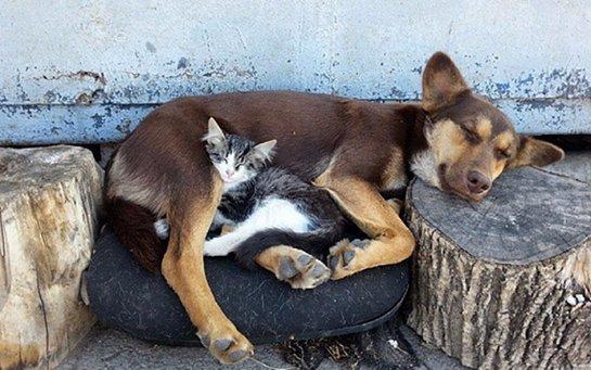 Кошка Муська и собака Каштанка