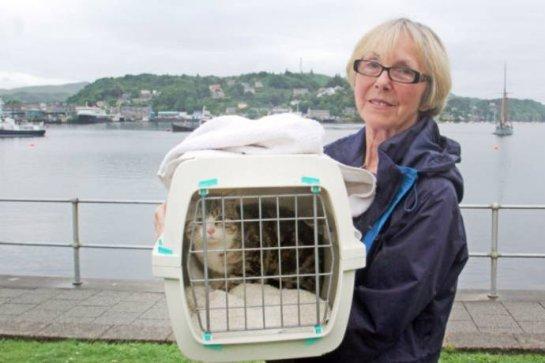 В Шотландии кошка проплыла на яхте 200 миль
