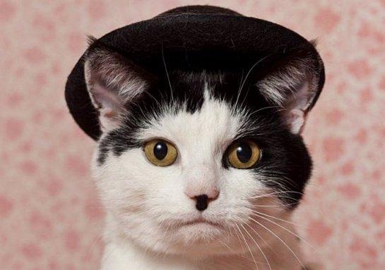 Кошка, похожая на Чарли Чаплина, ищет хозяев