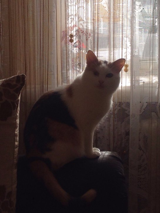 Новая жизнь кошки Баси