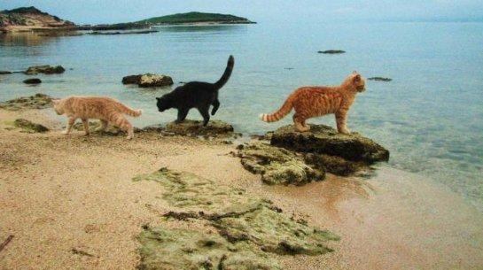 Кошачий приют на пляже стал одним из лучших туристических мест Италии
