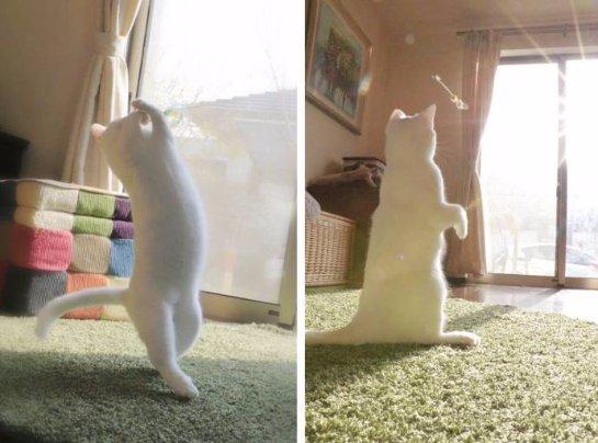 Кот, который любит танцевать