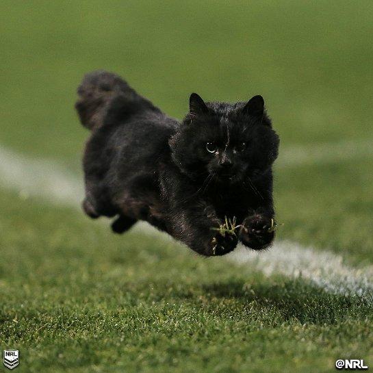Кот стал звездой регби-матча