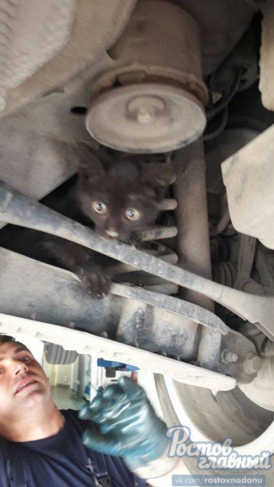 В Ростовском автосервисе в машине обнаружили котенка