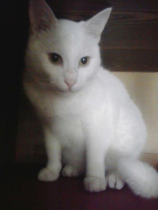 Глухой котик Перлуша