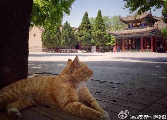 В Поднебесной пользователи Интернета спасли кошек от выселения из музея