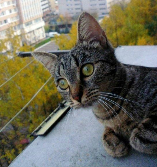 Кошка, у которой много имен