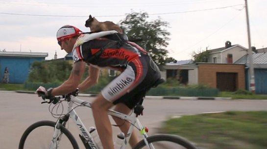 В Ульяновске кот входит в клуб велосипедистов