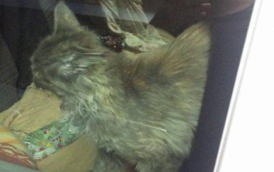 В Кишиневе спасли кота, который несколько дней просидел в закрытой машине