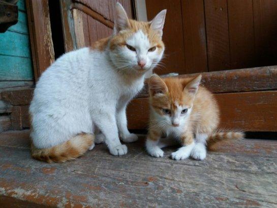 Кошачья семья из Самары