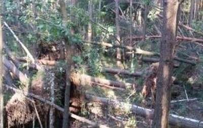 На Черниговщине прошли ураганы, которые повредили 500 гектаров леса