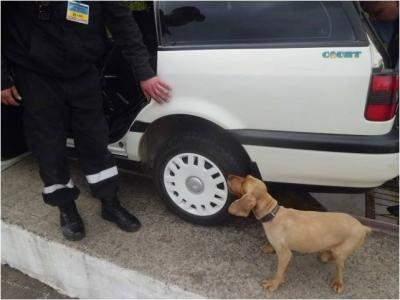 На Закарпатье убили служебную собаку пограничников