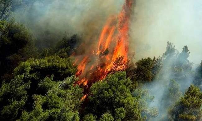 В США из-за лесного пожара свои дома покинули более двух тысяч граждан
