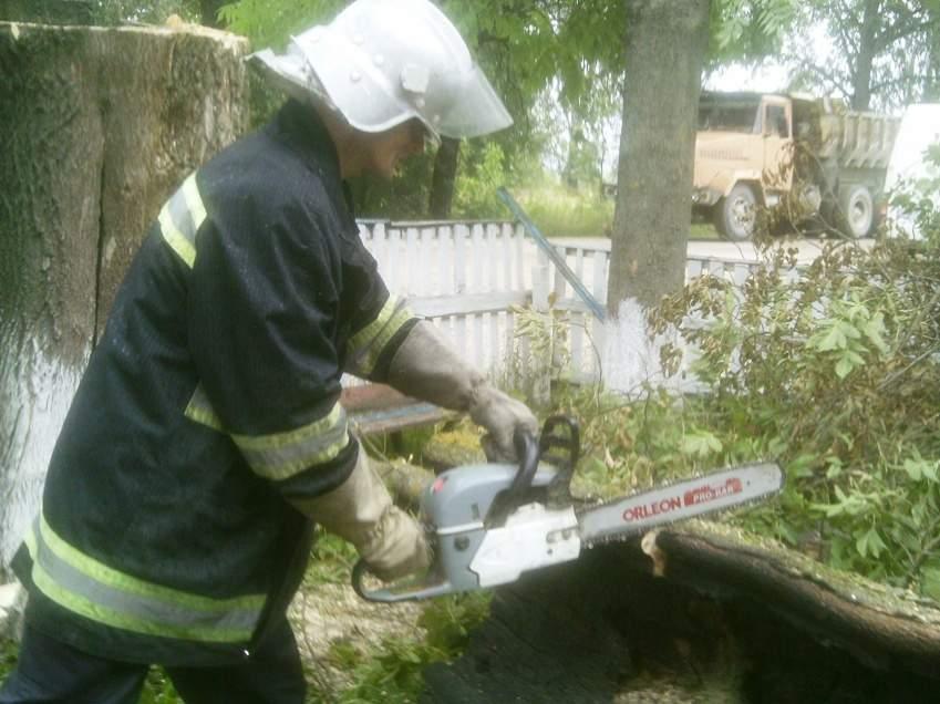 На Житомирщине горящее дерево упало на сельский магазин и спровоцировало пожар