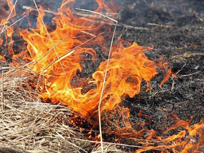 В результате возгорания травы в Одессе пострадал человек