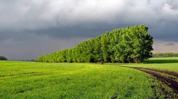 В Украине активно уничтожаются полезащитные лесополосы