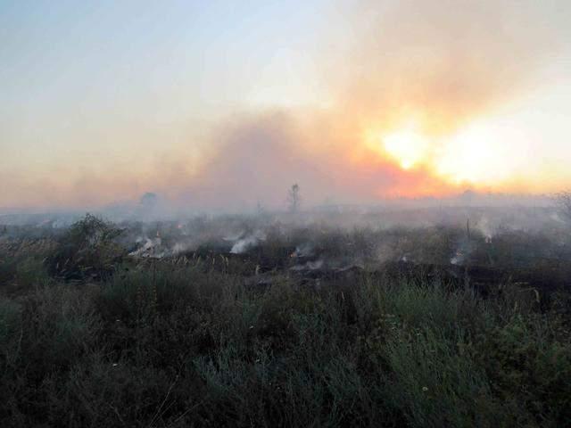 На Луганщине разгорается лесной пожар. Огонь достиг уже 65 гектаров земли