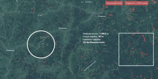 Создана интерактивная карта вырубки украинских лесов