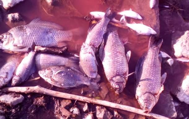 Стали известны причины загрязнения реки под Киевом
