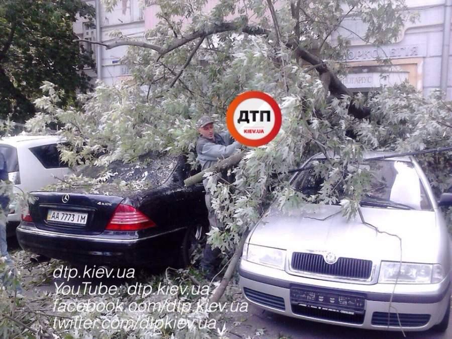 В Киеве на 5 припаркованных авто упало дерево