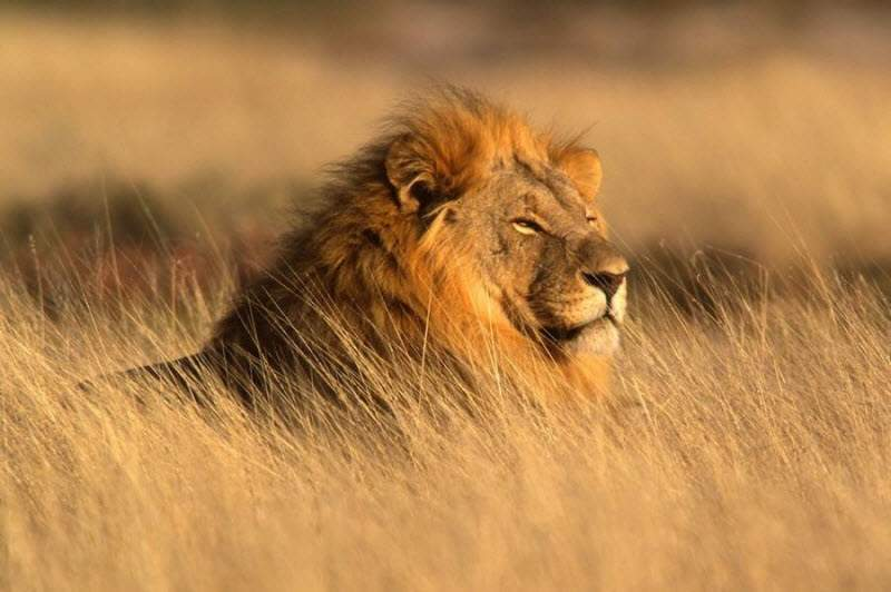 Два браконьера погибли в Африке из-за селфи с мертвым львом