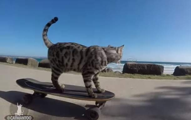 Кот по кличке Бумер освоил скейтборд