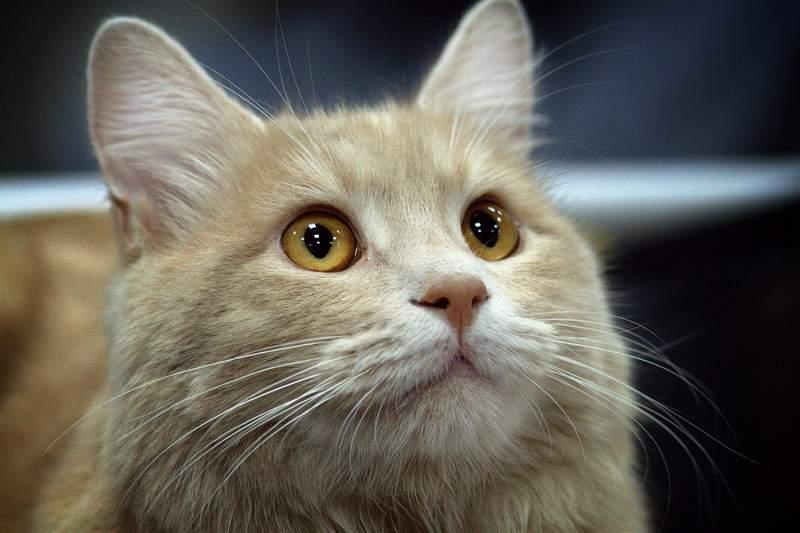В Киеве пройдет фестиваль для бездомных котов