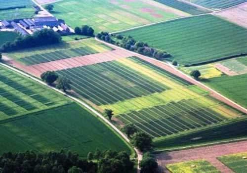 У Хмельницкого чиновника сын арендует землю