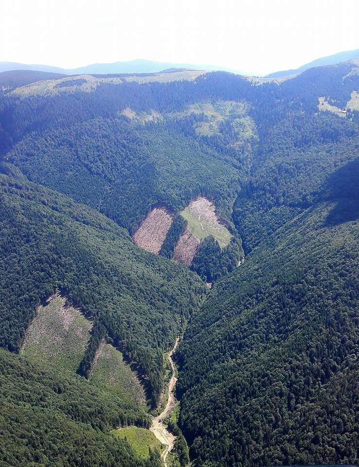 Луценко распорядился остановить контрабанду украинского леса