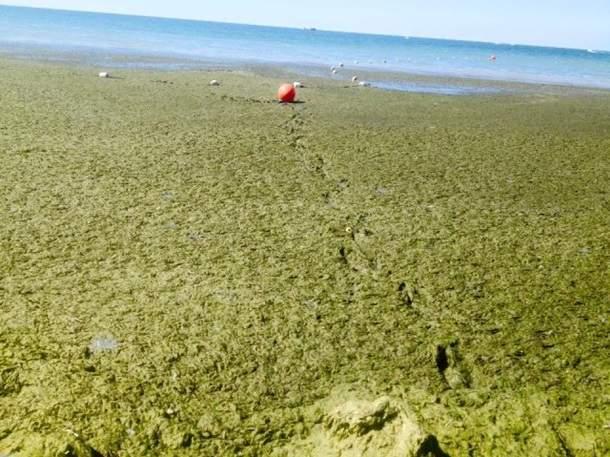 На херсонском курорте пляжи в ужасном состоянии