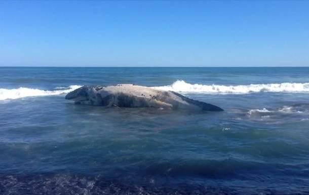 Вблизи Петропавловска-Камчатского местные жители обнаружили выброшенную на берег тушу кита
