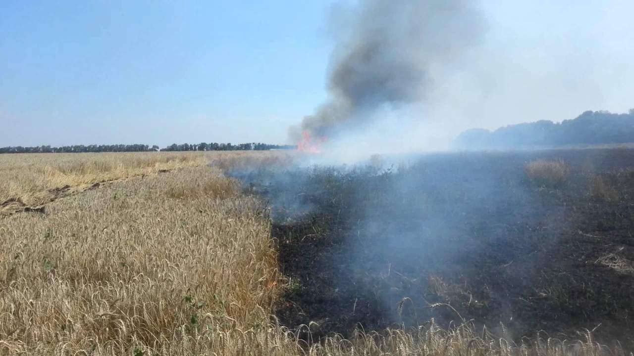 На Львовщине сгорело почти 35 гектаров пшеницы