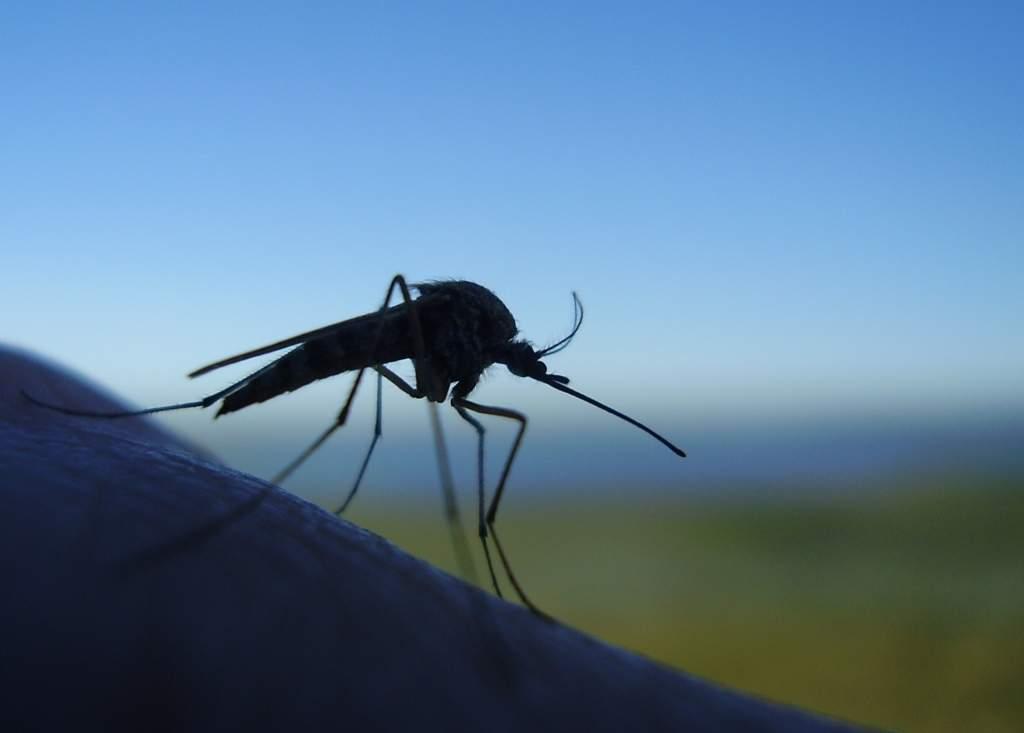 В Швеции определился чемпион по ловле комаров