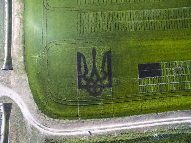 Патриотично! На Херсонщине вырастили герб Украины