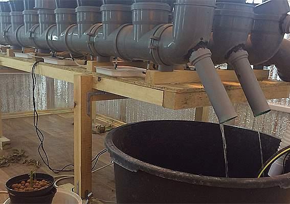 В Киевской области мужчина вырастил конопли на 2 млн грн