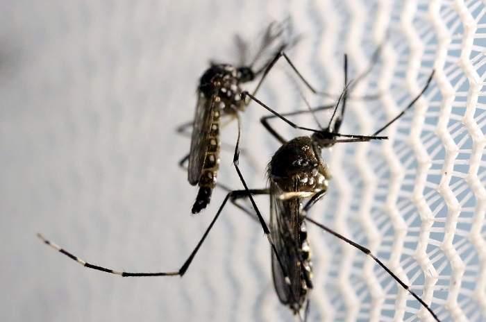 Во Флориде зафиксированы два новых случая заражения вирусом Зика
