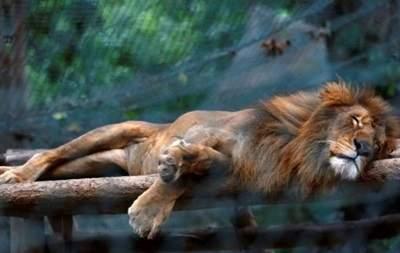 В зоопарке венесуэльской столицы от голода погибли 50 животных