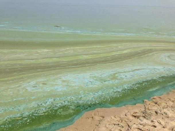В столице берега Днепра покрылись зеленой плесенью