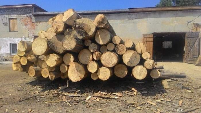 Во Львовской области остановлена незаконная деятельность трёх пилорам