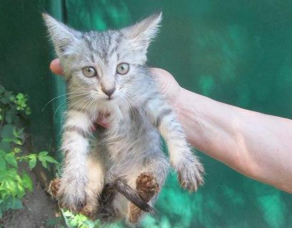 В Воронеже спасли котенка, который провалился в бетонный колодец