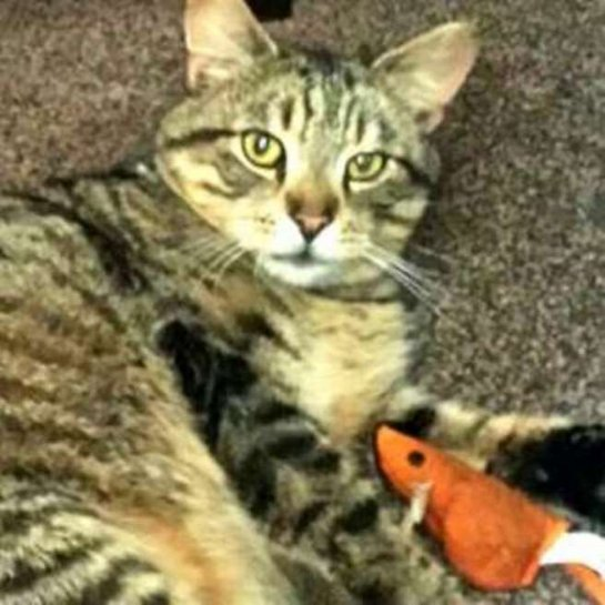 Кот сильно потолстел, будучи три года на улице