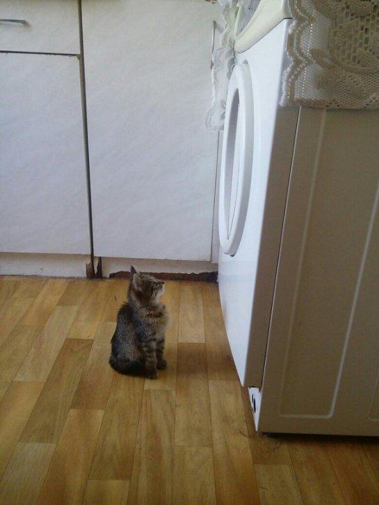 Кошечка по кличке Ами