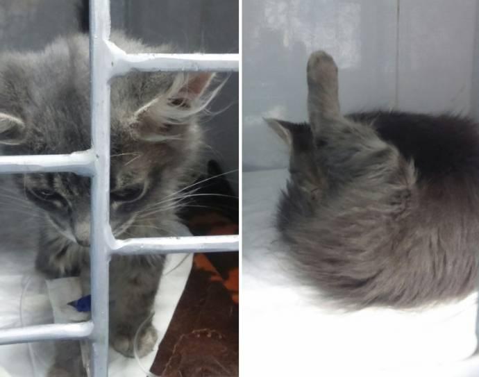 В Екатеринбурге спасли котенка, которого хотели усыпить