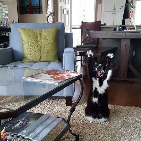 Кошка, у которой очень странная, но в то же время забавная привычка