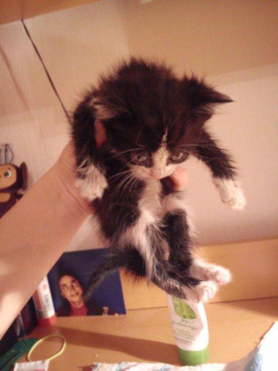 Кот в комплекте с квартирой