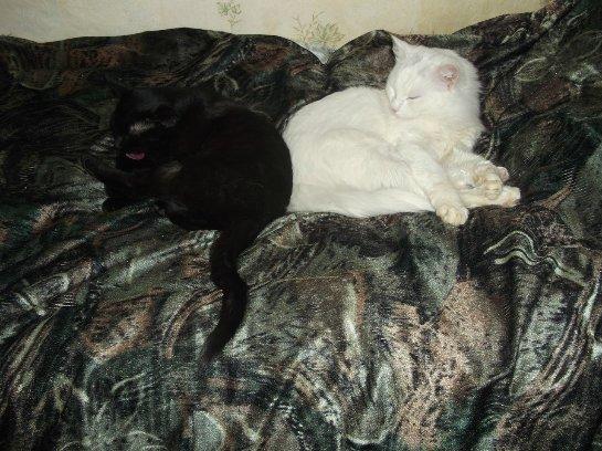 Инь-янь: Кошка Лилу и кот Даллас