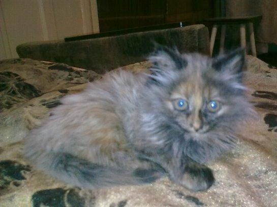 История про кошку по кличке Нафаня
