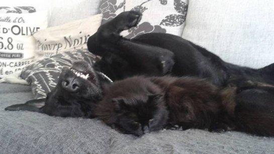 Кошка сбежала из дома из-за любви к собаке