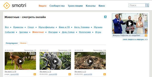 Видео про животных на smotri.com